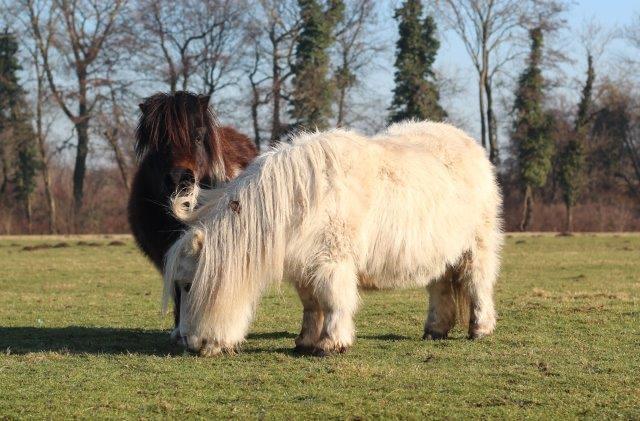 Pony's Kinderboerderij de Vechtse Hoeve
